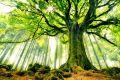 330695-green-tree.jpg